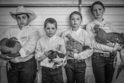 4H kids, Caleb Glaser, Aidan Siegel, Isabella Siegel, and Jaida Vroman with their prize winning poultry entries at the Alaska State Fair, Palmer, Alaska